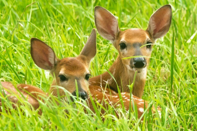 Food plots in Missouri are a supplemental food source supplied to wildlife such as deer, birds, turkey, quail, pheasants, and more.